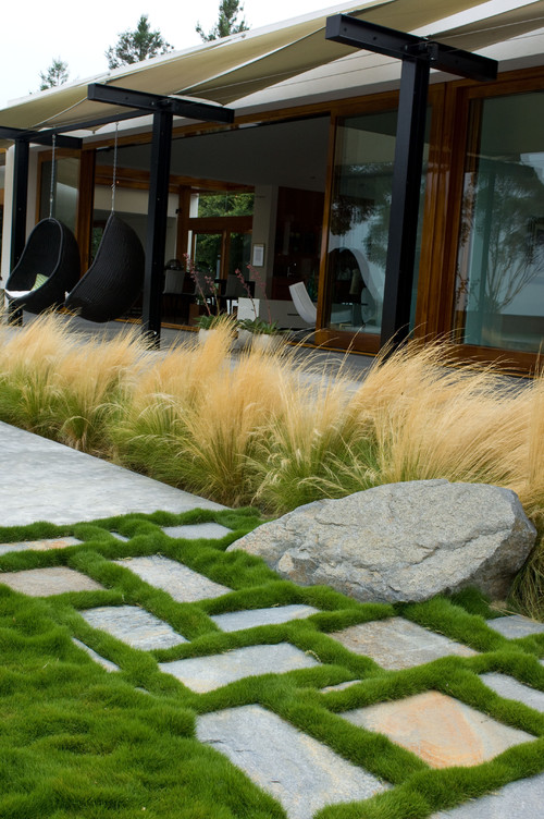 8 uses for ornamental grasses and wheat in your for Modern ornamental grasses