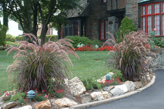 Grow your own wheat savvy urbanite farmer for Ornamental grass bed design