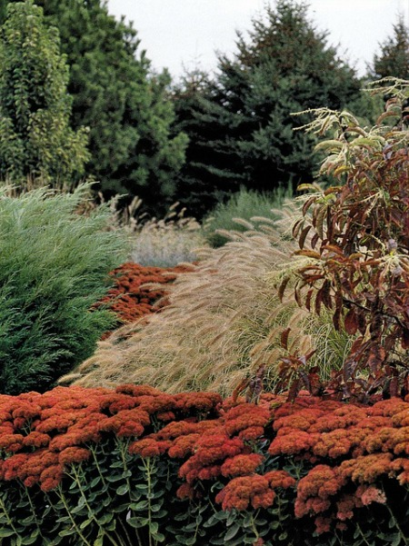 8 uses for ornamental grasses and wheat in your for Mounding grass