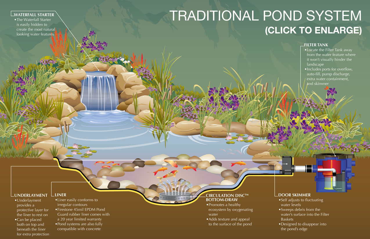 Dreaming of permaculture and landscaping with water for Koi pond basics